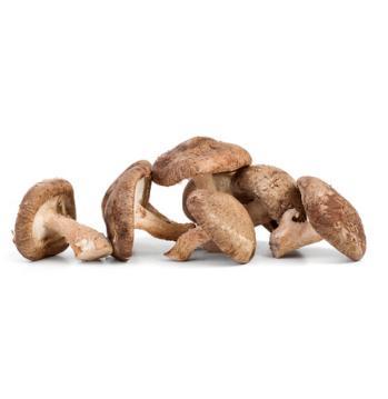 грибы шиитаке