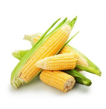 кукуруза свежая
