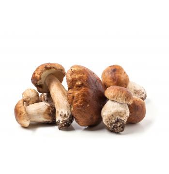 грибы белые